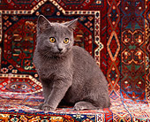 CAT 03 RK0687 07