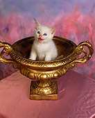 CAT 03 RK0708 01