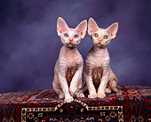 CAT 03 RK0735 02