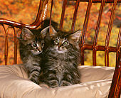 CAT 03 RK0740 02