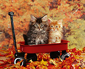 CAT 03 RK0743 02