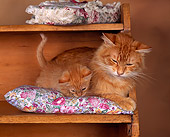 CAT 03 RK0780 02