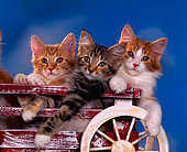 CAT 03 RK0793 02