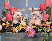 CAT 03 RK0842 03