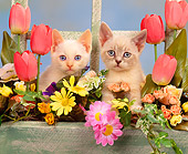 CAT 03 RK0842 05