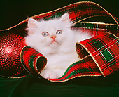 CAT 03 RK0854 01