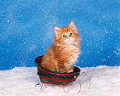 CAT 03 RK0876 06