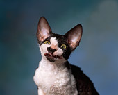 CAT 03 RK0897 01