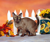 CAT 03 RK0903 04