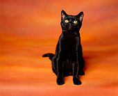 CAT 03 RK0910 05
