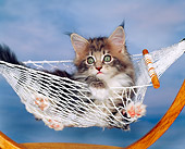 CAT 03 RK0950 15