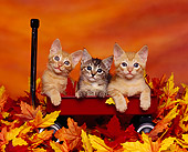 CAT 03 RK0956 03
