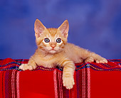 CAT 03 RK0968 02