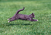 CAT 03 RK0975 09