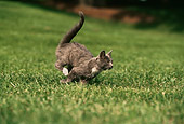 CAT 03 RK0975 21