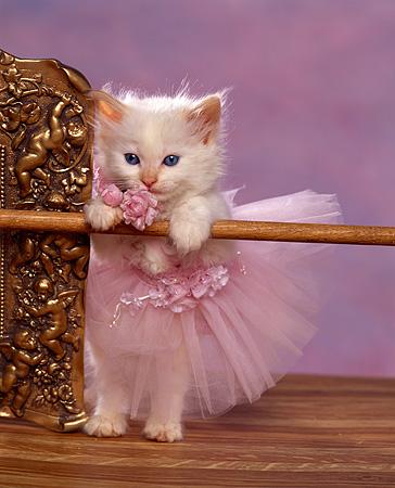 felicitacion para cata CAT_03_RK1032_03_P