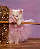 CAT 03 RK1032 03