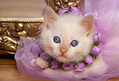 CAT 03 RK1036 05
