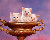 CAT 03 RK1042 08