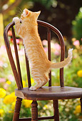CAT 03 RK1078 06