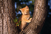 CAT 03 RK1084 03