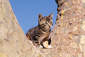 CAT 03 RK1090 05