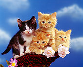 CAT 03 RK1109 06