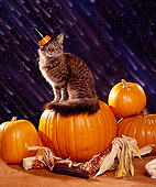 CAT 03 RK1127 11