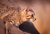 CAT 03 RK1135 02