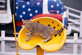 CAT 03 RK1138 01