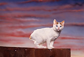 CAT 03 RK1150 08