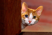 CAT 03 RK1152 03