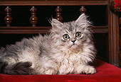 CAT 03 RK1183 03