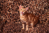 CAT 03 RK1246 02