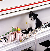 CAT 03 RK1261 06