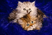 CAT 03 RK1264 06