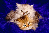 CAT 03 RK1264 10