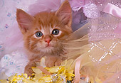 CAT 03 RK1351 17