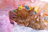 CAT 03 RK1352 06