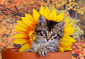 CAT 03 RK1391 06
