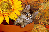 CAT 03 RK1391 13