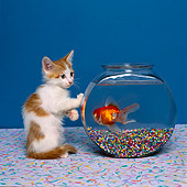 CAT 03 RK1404 03