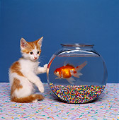 CAT 03 RK1404 06
