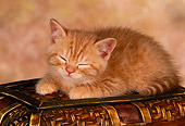 CAT 03 RK1427 02