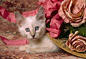 CAT 03 RK1441 07