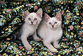 CAT 03 RK1461 08