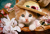 CAT 03 RK1475 01