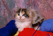 CAT 03 RK1478 01