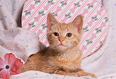 CAT 03 RK1496 03