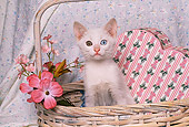 CAT 03 RK1504 02